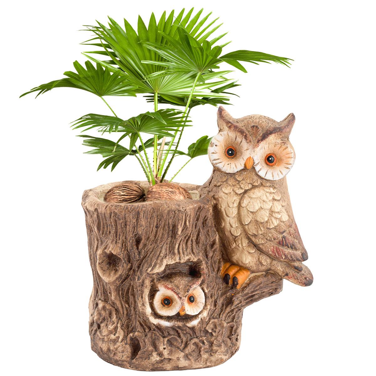 Sehr Gut art decor Pflanzgefäß Eule am Baum, Pflanzfigur, Pflanztopf, Höhe  PA32